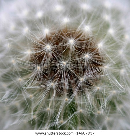 Close view of a wind dandelion - stock photo