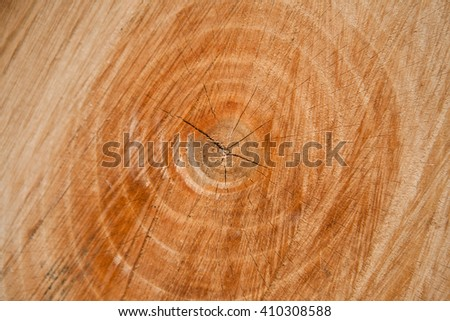 Close view of annual rings of a walnut tree trunk - stock photo