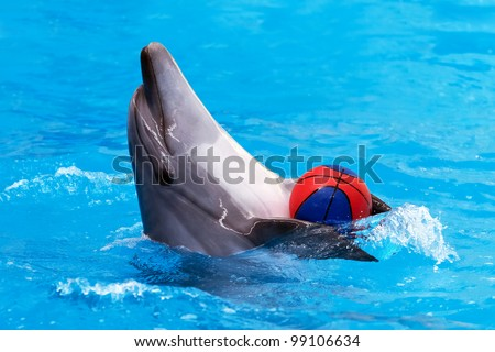 Close view of dolphin playing with ball in blue water - stock photo