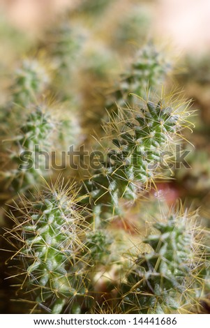 close view of green cactus