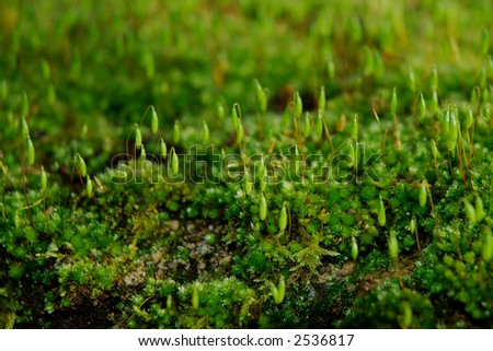 Close view of green moss. - stock photo