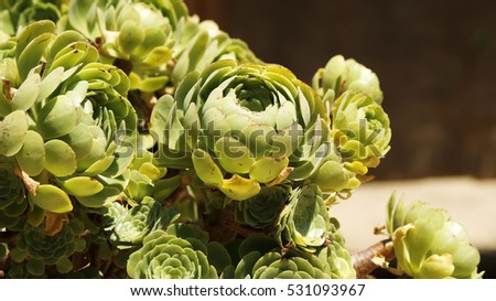 Close view of green succulent plants