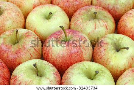Close view of several rows of fresh gala apples.
