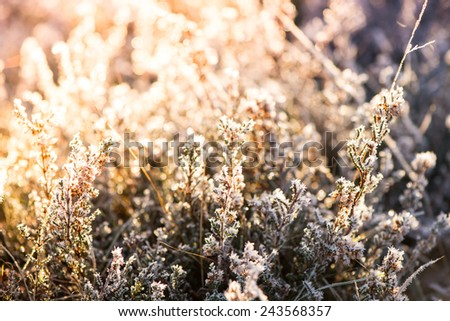 close view on frost covered plants with cross vintage color effect