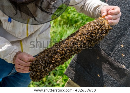 Close view on the beekeeper checking the honeycomb