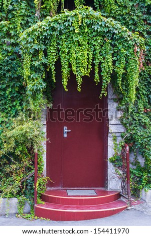 Closed door and a wall covered with ivy - stock photo