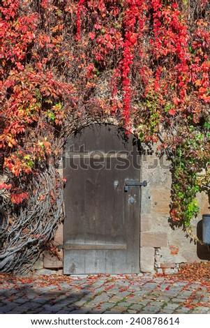 Closed door with vines in Nuremberg castle, Germany  - stock photo