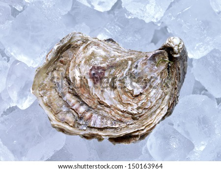 closed oyster on ice - stock photo