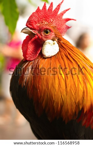 closed up beautiful rooster - stock photo