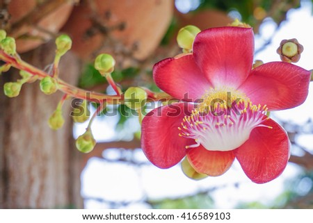 closed up Buddhism sala flower with nature background.