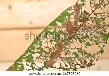 Closed up holes in a leaf look like natural texture with wooden background  - stock photo