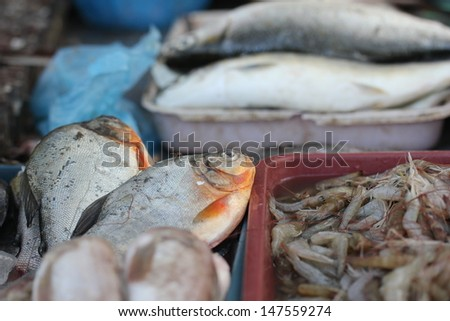 Closed up of fresh shrimp in the market - stock photo