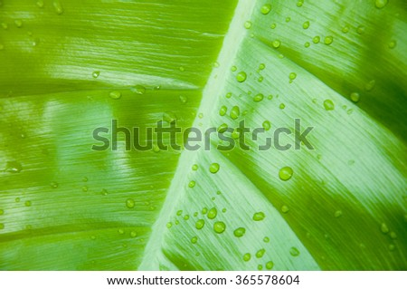 Closed-up shot of a green tropical leaf with waterdrop - stock photo