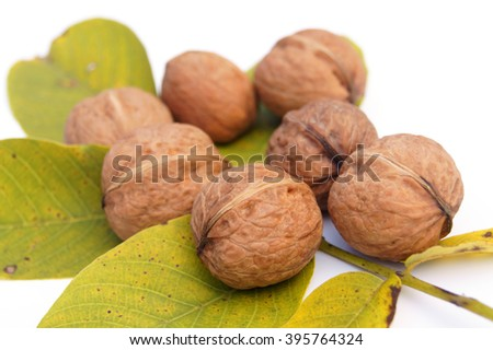 Closed walnuts lying on the walnuts' leaves  - isolated on white                  - stock photo