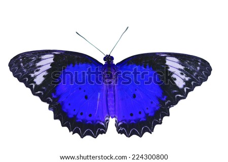 Closeup a beautiful blue butterfly isolated on white background