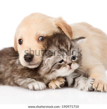 closeup baby puppy dog and little kitten together. isolated on white background - stock photo