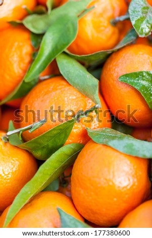 Closeup background of fresh tangerines or clementines displayed for retail in a farmers market or supermarket with their green leaves, a healthy dessert snack and source of vitamin C - stock photo