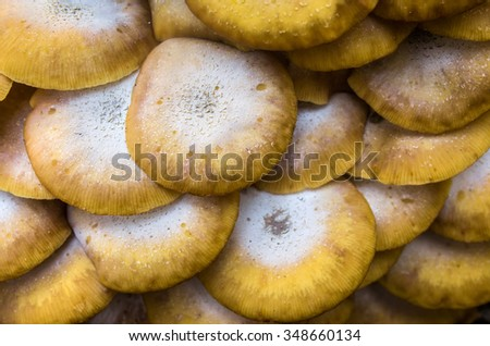 Closeup background of many yellow wild mushrooms - stock photo