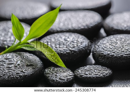 closeup beautiful spa background of green branch bamboo on zen basalt stones with dew