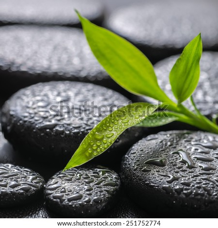 closeup beautiful spa background of green branch bamboo on zen basalt stones with dew  - stock photo