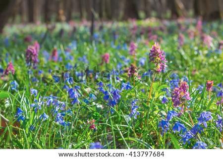 closeup beautiful spring flowers - stock photo