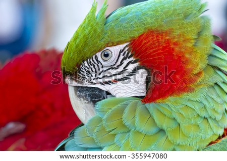 Closeup  Blue and Gold Macaw  - stock photo
