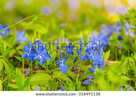 closeup blue flowers background - stock photo