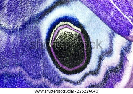 Closeup blue wings butterfly - stock photo
