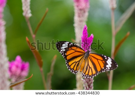 Closeup butterfly on flower in the garden - stock photo
