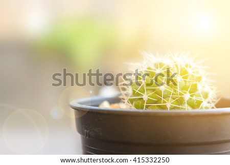 closeup cactus with natural background, over sunlight  - stock photo
