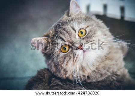 Closeup Cat face laying and Looks with interest - stock photo