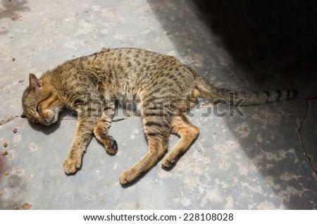 Closeup cat sleeping on floor. - stock photo
