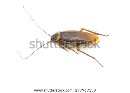 Closeup cockroach isolated on a white background - stock photo
