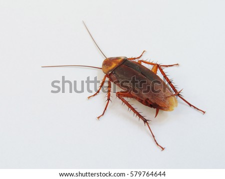 Closeup,cockroach on white background.