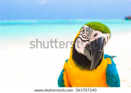 Closeup colorful bright parrot on white sandy beach at tropical island  - stock photo