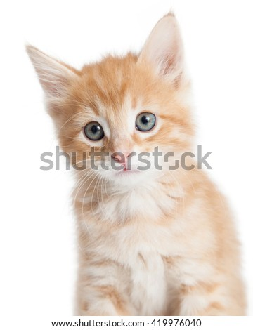 Closeup cute little orange color young tabby kitten over white
