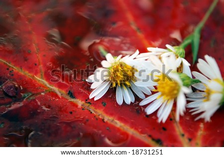 Closeup detail of autumn leaves and flowers covered in water - stock photo