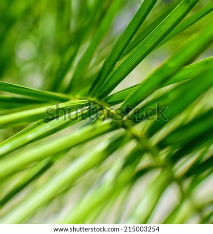Closeup detail of palm tree leaf. Green background. - stock photo