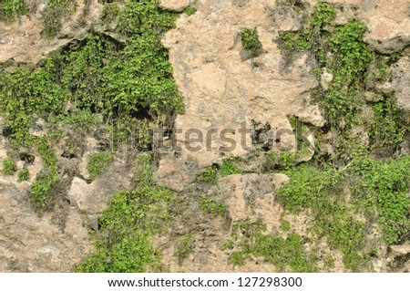 Closeup details of old fortress wall of San Juan, Puerto Rico with vegetation growing in deteriorated cracks - stock photo