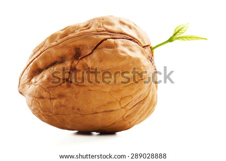 Closeup Dried Walnut with Leaves Isolated on White Background. - stock photo