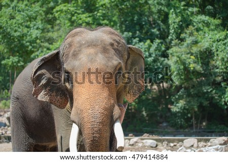 closeup elephant in farm of Thailand ,in zoo