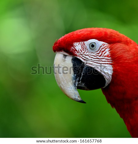 Closeup face of Red-and-Green Macaw Parrot bird, green-winged macaw bird - stock photo