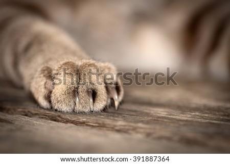 closeup feet of cat  - stock photo