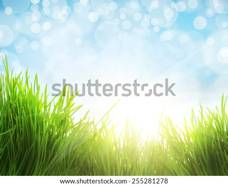 closeup fresh green  grass and sunlight, natural easter background - stock photo