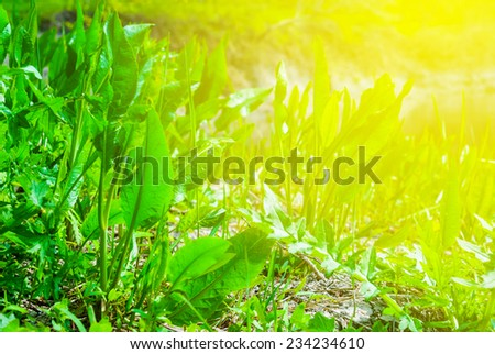 closeup fresh green sprouts - stock photo