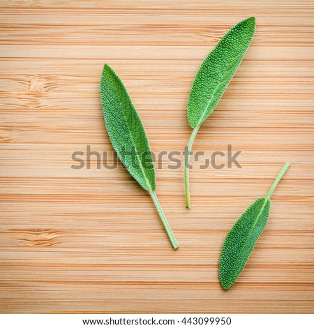 Closeup fresh sage leaves  on wooden background. Alternative medicine fresh salvia officinalis. Fresh salvia officinalis leaves on Bamboo cutting board. - stock photo