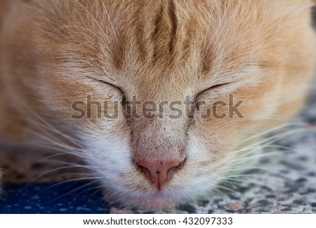 Closeup ginger cat sleeping on a table