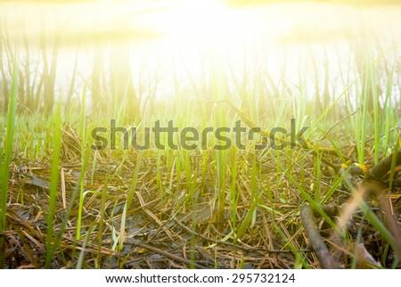 closeup grass - stock photo