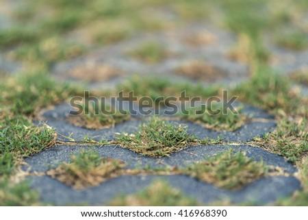 Closeup grass on rock - stock photo