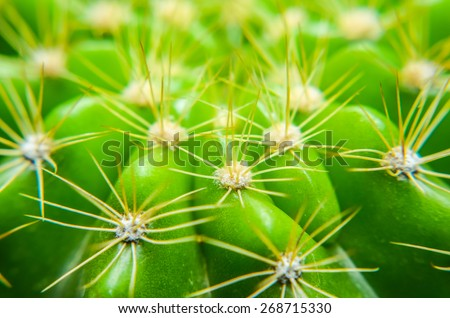 Closeup green cactus with needles pattern for background - stock photo